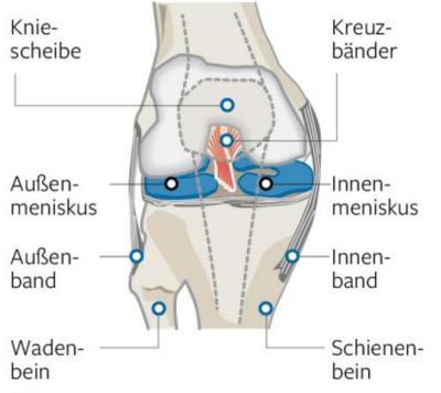 Die Menisken im Kniegelenk